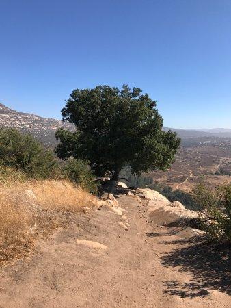 Rancho La Puerta Spa: Alex's Oak