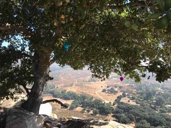 Rancho La Puerta Spa: View from under the oak