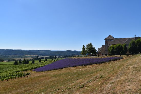 King Estate Winery: Lavender used for organic pest control