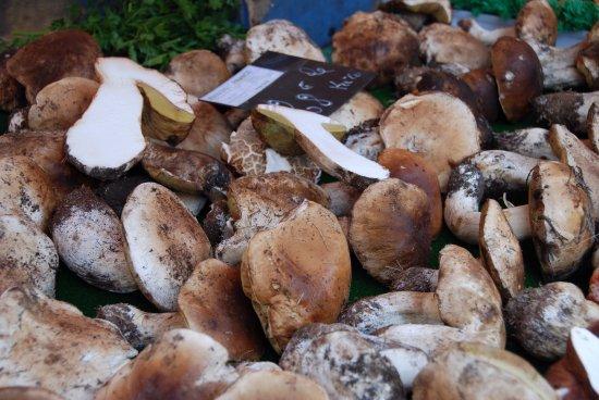 Montefollonico, Italien: Mushrooms in the fall!