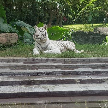 Taman Safari dan Bahari Bali: IMG_20170815_164838_958_large.jpg
