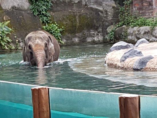 Taman Safari dan Bahari Bali: 20170813_115953_large.jpg