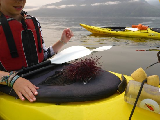 Quadra Island, Canada: Red Sea Urchin
