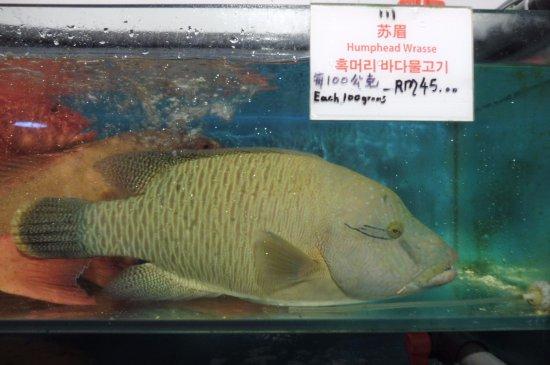 humphead Wrasse - Picture of Fish Market Restaurant, Kota