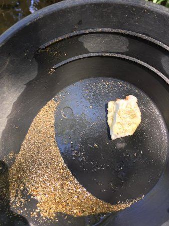 Jamestown, CA: Here is my actual pan. A spec of real gold is dead center.