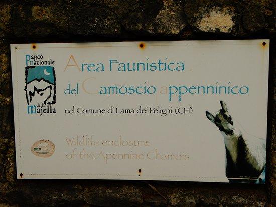 Lama dei Peligni, Italy: Area faunistica del Camoscio