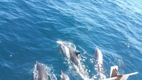 Dana Point, Californië: Dana Wharf Whale Watching & Sportfishing