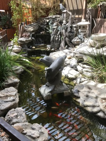 Koi Pond On The Patio Outside Dining Picture Of Sakanaya Japanese