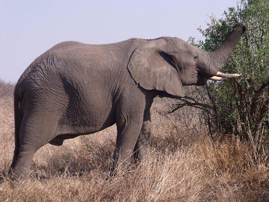 Kruger National Park: lungo la starda