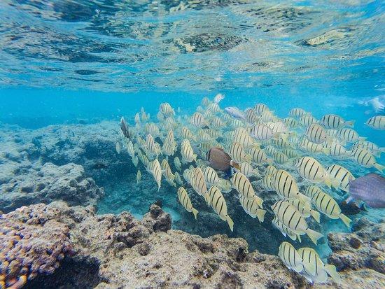 Hanauma Bay Nature Preserve: photo0.jpg