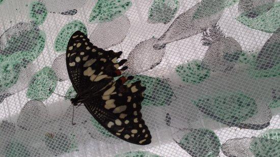 Motyli dum Zirovice
