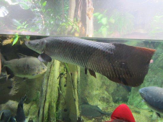редкие породы рыб