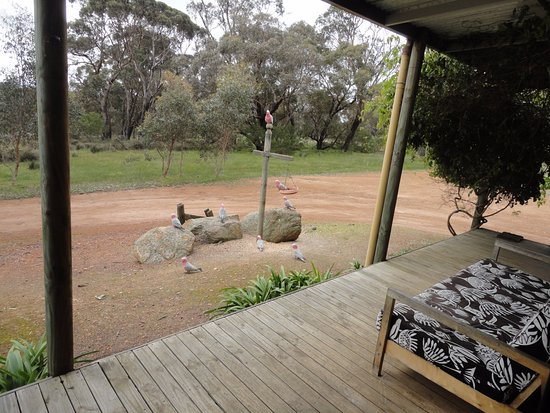 Mount Barker, Αυστραλία: Outdoor verandah, can see the Stirling Ranges on a fine day
