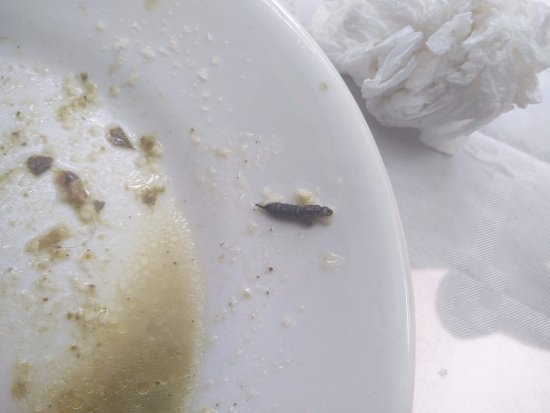 San Donato Val di Comino, Italien: insetto morto trovato nel piatto di pasta.