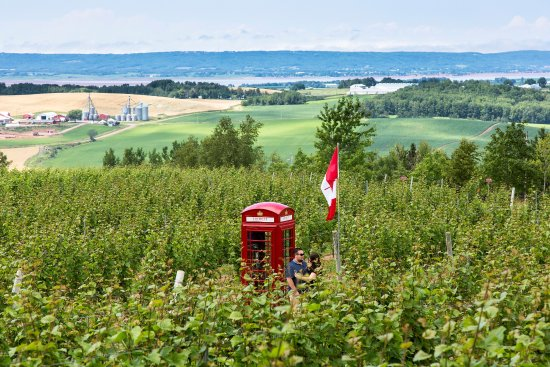 Wolfville, Канада: The red telephone box.