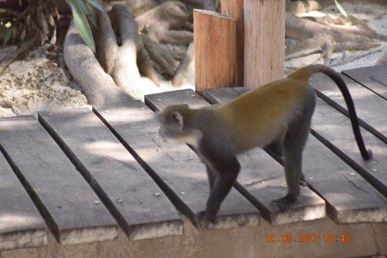 Waterlovers Beach Resort: Don't feed the monkeys