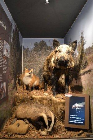 Villeneuve-Minervois, Francia: Les prédateurs de la truffe