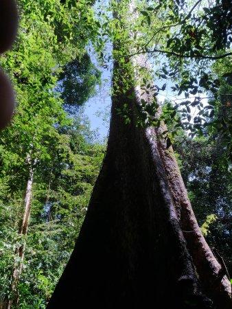 Mulu World Heritage Area: P_20170815_104809_vHDR_Auto_large.jpg