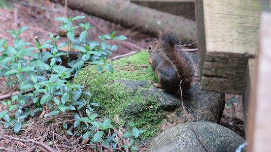 North Vancouver, Canada: Eichhörnchen