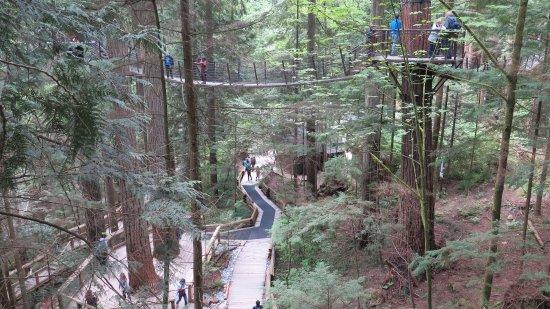 North Vancouver, Canada: Zwischen den Bäumen