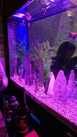 Dreux, Frankrijk: Aquarium dans le restaurant