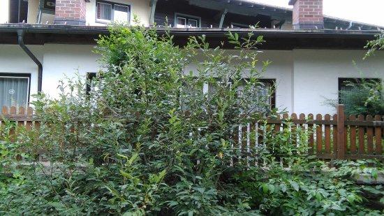Hanneshof Hotel: geen mooi geraniumbalkon, maar struiken pal voor de deur