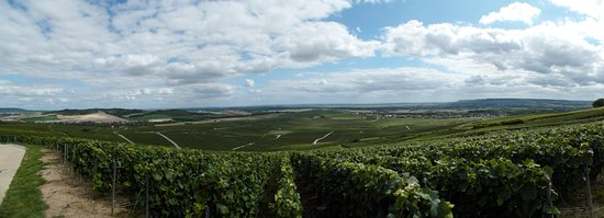 Mutigny, Francia: de wijngaard