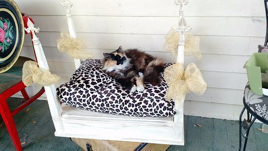 Nashville, IN: Upcycled pet bed