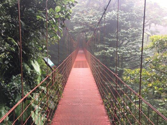 Monteverde Cloud Forest Reserve, Costa Rica: the red bridge