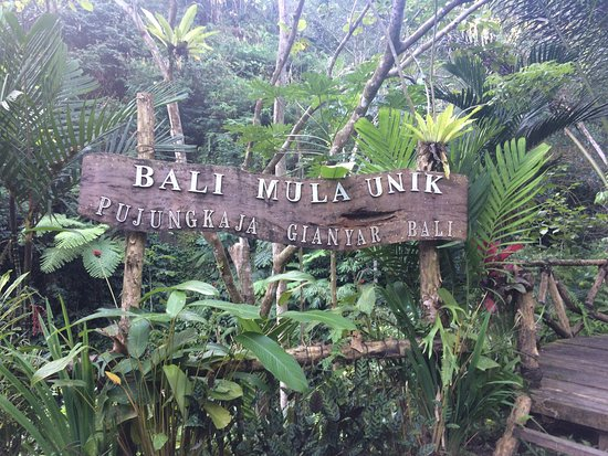 Perfect Gateway Review Of Bali Jungle Huts Tegalalang Indonesia Tripadvisor