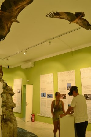 Beli, Croatia: Griffon Exhibition