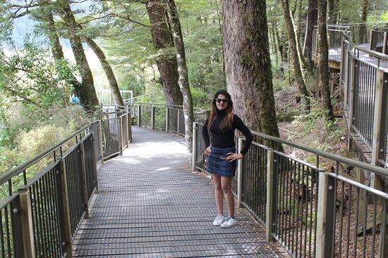 Fiordland National Park, New Zealand: Paved walkway