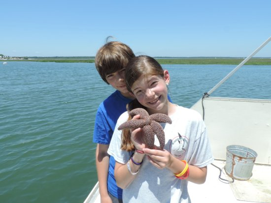 Stone Harbor, NJ: Live sea animal touch tank with sea stars, crabs, shrimp, shellfish, fish and more.