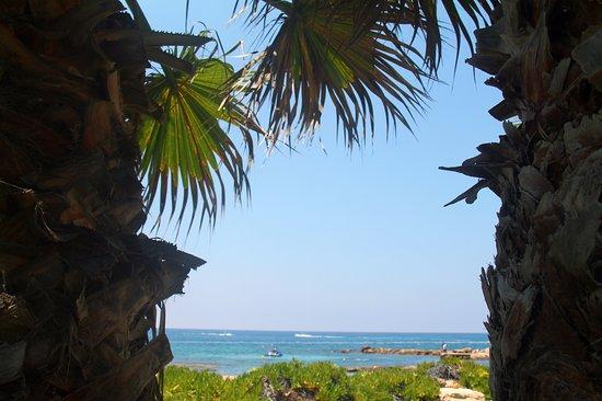 Louis Imperial Beach Photo