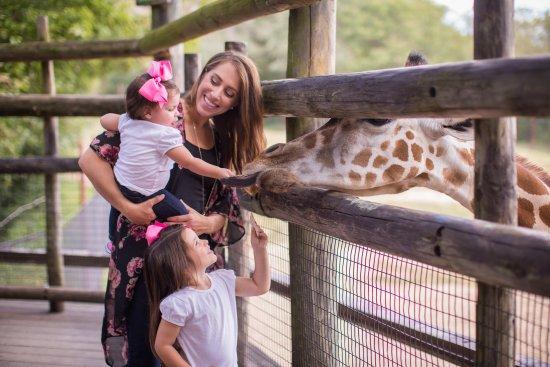 Springfield, MO: Go WILD at Dickerson Park Zoo
