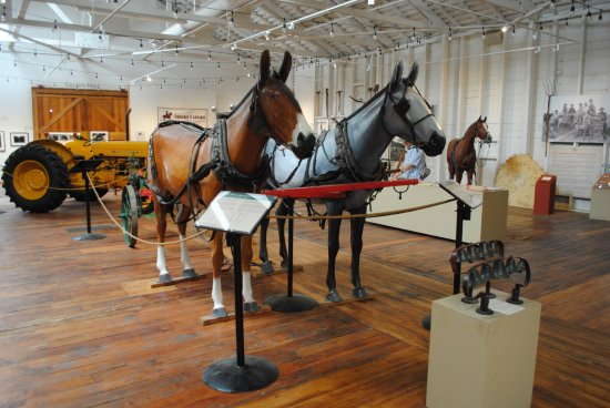 Santa Paula, كاليفورنيا: Vintage tractors and harness and equine facts on display.