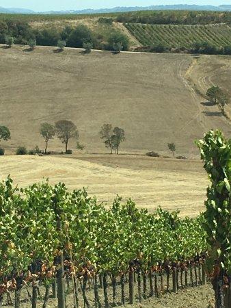 Scansano, Italia: Agriturismo I Gretacci