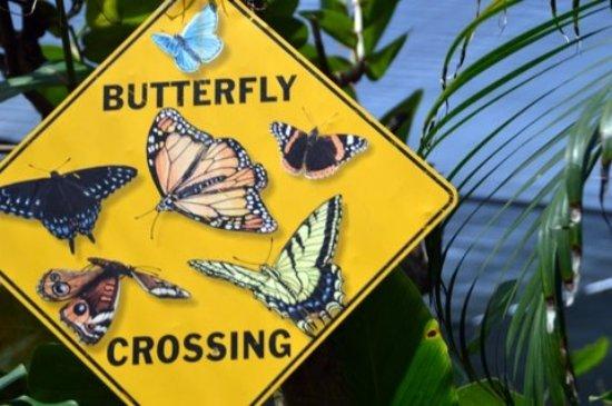 Quartier D'Orleans, St Martin / St Maarten: Beware of butterflies:-)