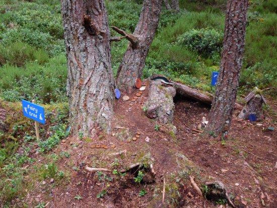RSPB Loch Garten: Little elfs