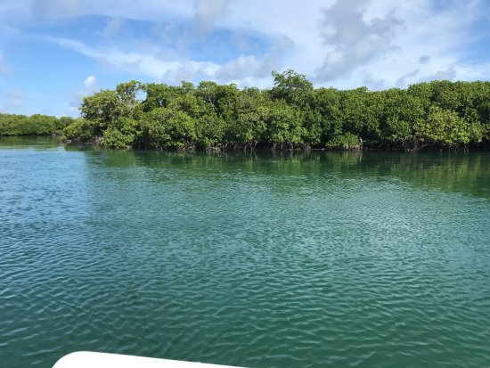 Sugarloaf Key, FL: Backcountry and mangroves!