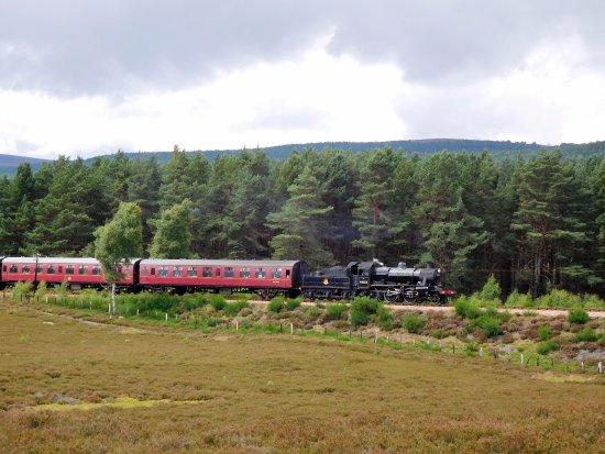 Aviemore, UK: Steam train crosses nature