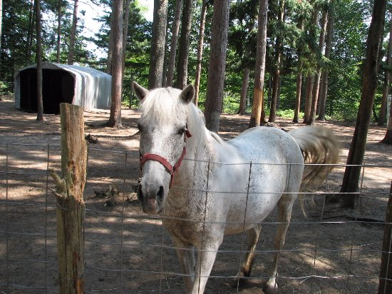 Baraga, MI: A rescue horse that had 8 calves which needed extensive surgery which they paid for.