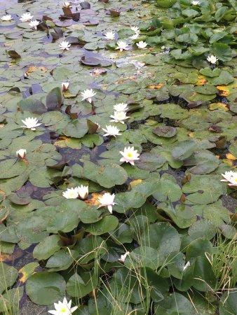 Bergius Botanic Garden: photo7.jpg
