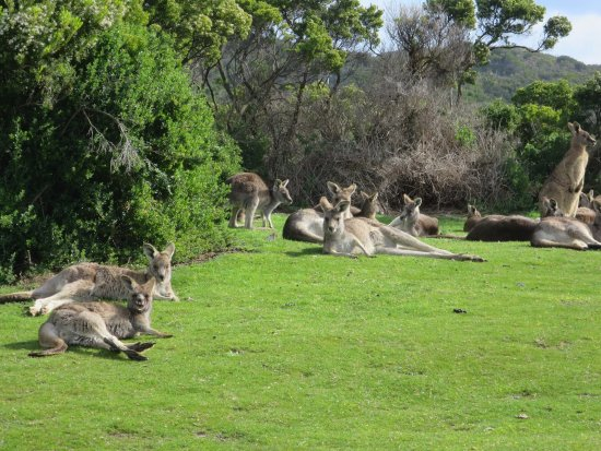 Melbourne Boutique Tours: During a stop to find kangaroos. We found a mob!