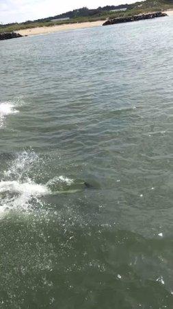 Virginia Aquarium & Marine Science Center: Dolphin Cruise