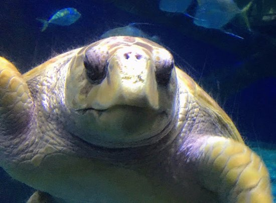 Virginia Aquarium & Marine Science Center: Sea Turtle