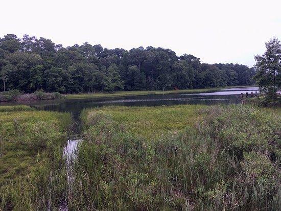 Virginia Aquarium & Marine Science Center: Swamp area outside