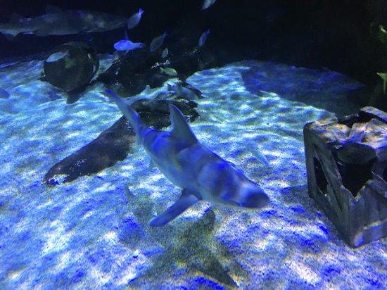Virginia Aquarium & Marine Science Center: Shark