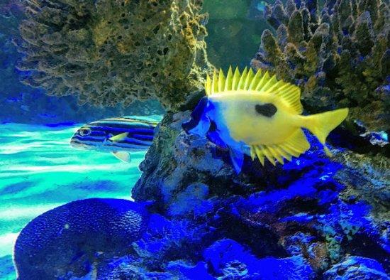 Virginia Aquarium & Marine Science Center: Spike fish