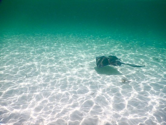 Chichi Charters: Swimming with the rays